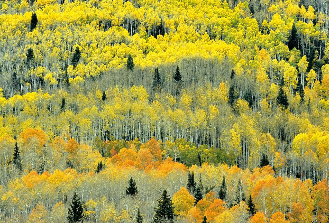 5933cfa0b747a-FALLCOLORS10_preview