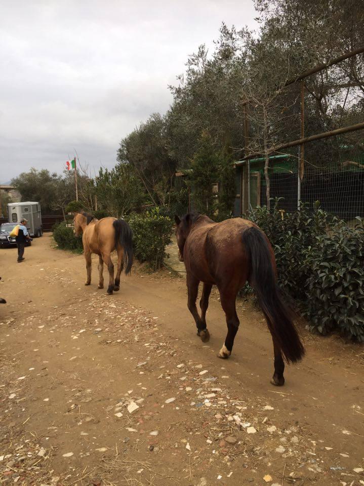 i cavallini del CIT in pensione