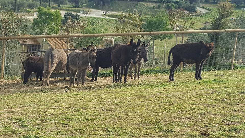 il Ranch di Gigi